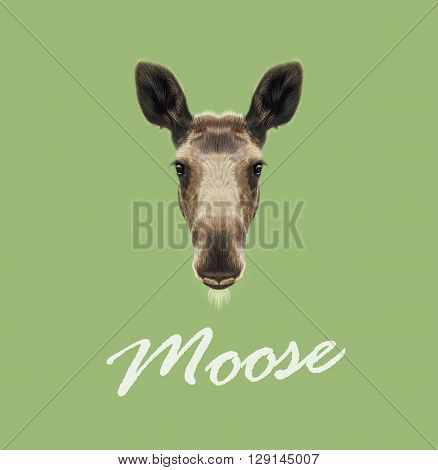 Vector Illustrated Portrait of Moose. Cute face of forest elk on green background.