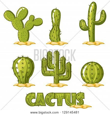 six flower green Cactus Collection. Vector illustration