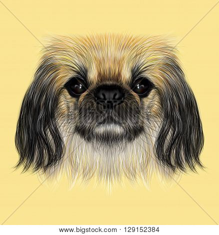 Illustrated portrait of Pekingese dog. Cute fluffy face of Pekingese dog on yellow background