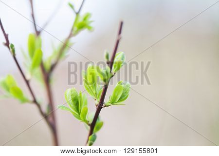 Tree branch macro view. Green leaves texture, springtime and new life concept. soft pastel background. shallow depth of field.