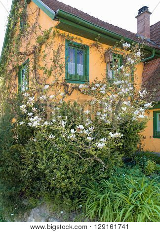 idyllic overgrown house detail at a village in Hohenlohe named Baechlingen