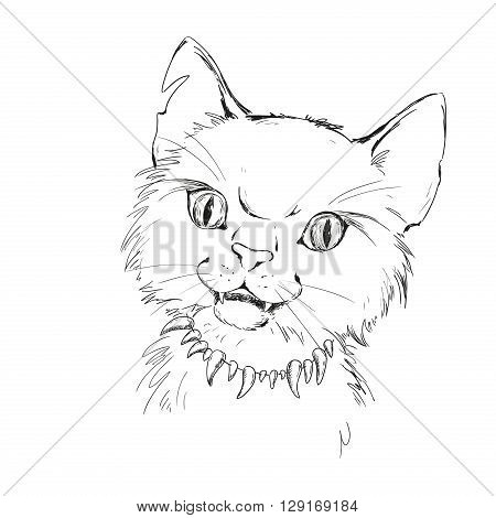 Character wild cat. Tramp street. Tattoo sketch vector