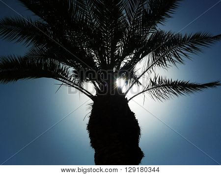 Silhouette of palm trees on a sky background. Backlight