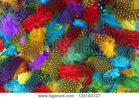 close up of the various color feather background