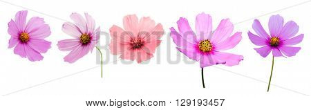 Set of Flowers Isolated on White Background