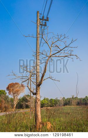 Tree branch in front of electrical transmission line