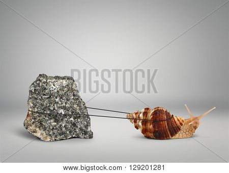Snail pulling big stone , persistence concept