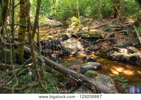Kbal Spean brook in Angkor Wat Cambodia