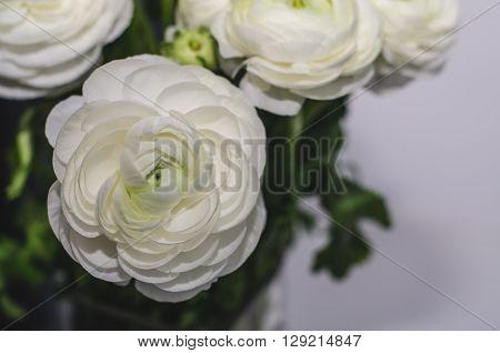 Beautiful bouquet of buttercup ranunculus flowers on white grey background. Still life rustic style dark tones macro. Modern beauty stylization.