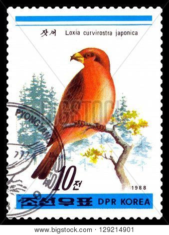 STAVROPOL RUSSIA - APRIL 30 2016: a stamp printed in DPRK shows Loxia curvirostra japanese Birds series circa 1988