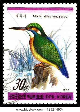 STAVROPOL RUSSIA - APRIL 30 2016: a stamp printed in DPRK shows Vulpes bengalensis est Atthis Alcedo Birds series circa 1988