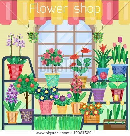 Houseplants on the showcase in flower shop. Home flowers in plant store. Shop interior. Vector illustration. Flat style