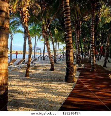 Camino entre palmeras junto al mar tomada por la mañana