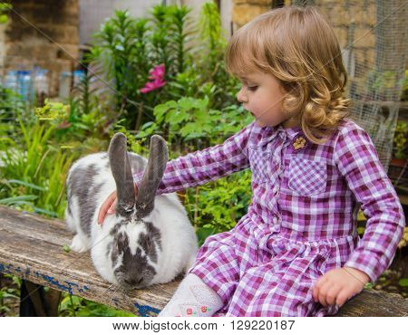 little girl petting a large spotted rabbit