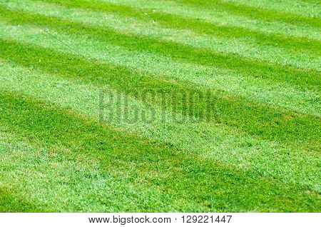 Perfect flat neat lawn with stripes mown into tfhe grass