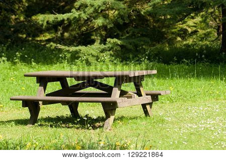 Seating area to rest in the woodland clearing