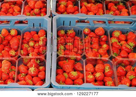 Crates with fresh strawberries at the market