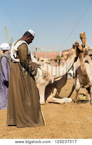 DARAW, EGYPT - FEBRUARY 6, 2016: Portrait of camel salesmen counting money at Camel market.