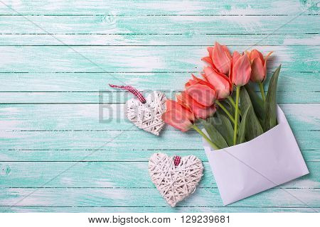 Coral tulips in white envelope and two white decorative hearts on turquoise painted wooden background. Selective focus. Place for text.
