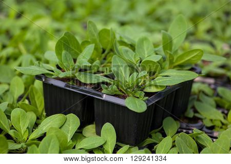 young plant new life , Green sapling Ecology World Environment Day CSR Seedling Go Green Eco Friendly Earth Health Care Food Garden New Life concept.