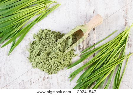 Barley grass and heap of young powder barley with wooden scoop healthy nutrition and lifestyle body detox