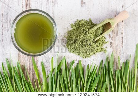 Barley grass with cup of beverage and young powder barley with scoop healthy nutrition and lifestyle body detox