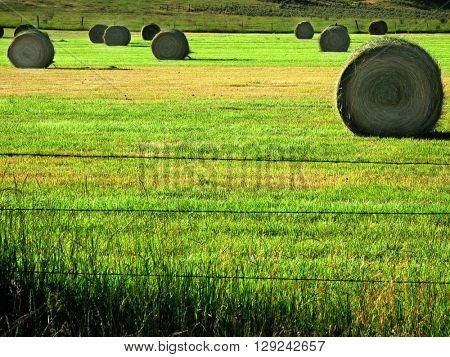 Hay Bales in Farm Field