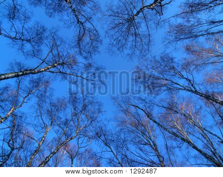 Round Dance Of Trees