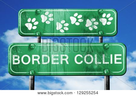 Border collie, 3D rendering, rough green sign with smooth lines