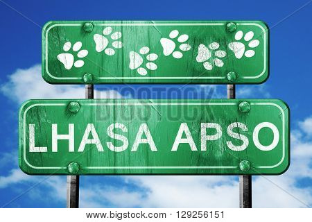 Lhasa apso, 3D rendering, rough green sign with smooth lines