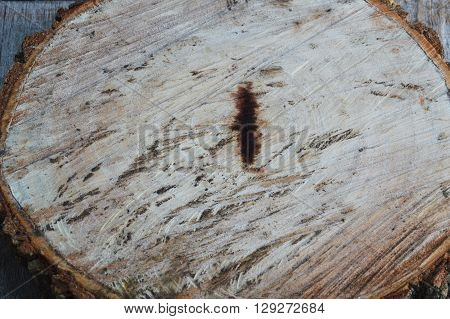texture of tamarind wood cut for made chopping block