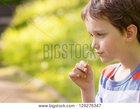 Sweet Little Boy Smelling A Daisy
