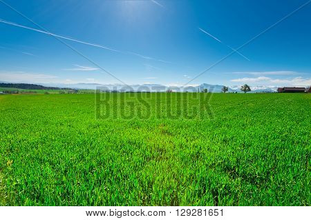 Pasture in Switzerland on the Background of Snow-capped Alps ** Note: Soft Focus at 100%, best at smaller sizes