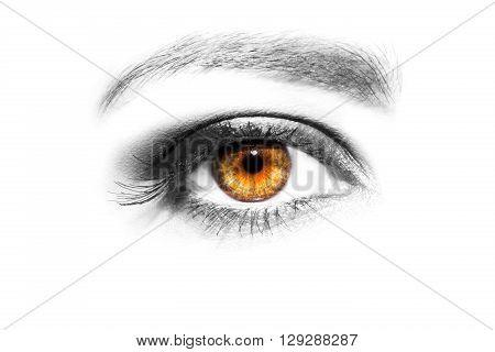 Eye Makeup. Beautiful Eyes Make up detail eyelash extension