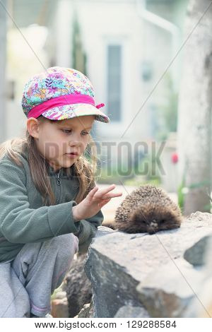 Girl with pet. Cute girl plays with hedgehog.