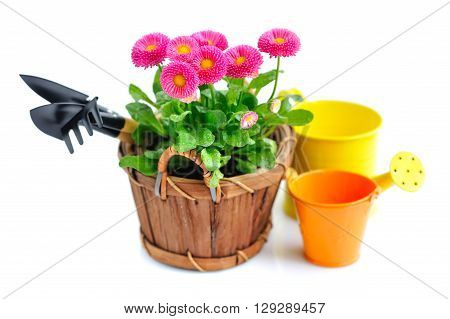 Marguerite Flowers And Garden Tools On A White Background