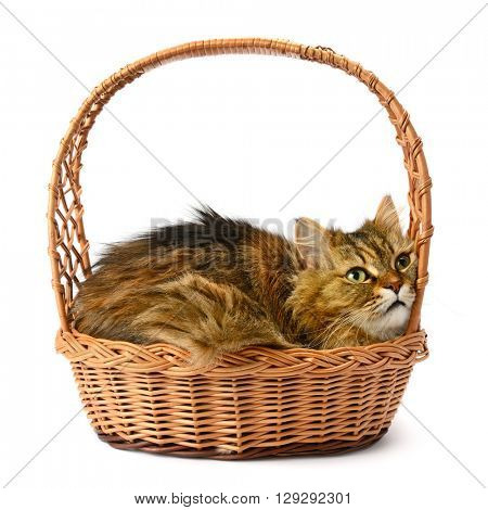 Beautiful cat in basket isolated on white background