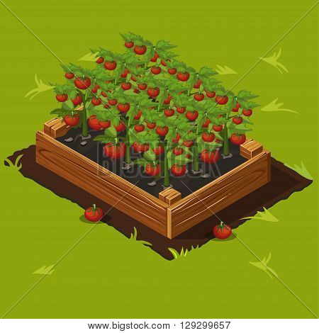 Vegetable Garden Wooden Box with Tomatoes. Set 4