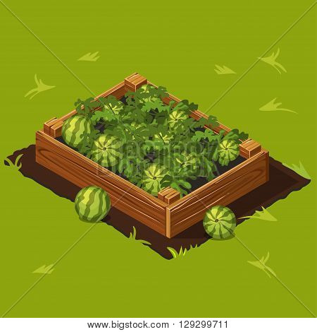 Vegetable Garden Wooden Box with Watermelons. Set 7