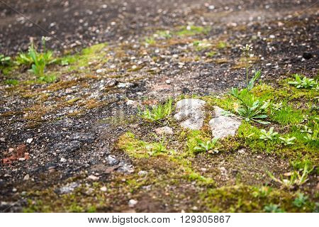 young grass growing on the old asphalt in the spring