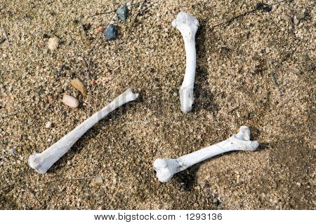 Bleached Bones
