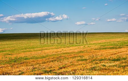 harvested field against the blue sky organic, dramatic,