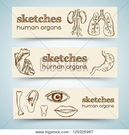 Human Organs In Sketches Style Set. Vector Illustration Vertical