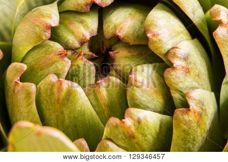 Fresh Artichoke Macro Shot With Natural Light