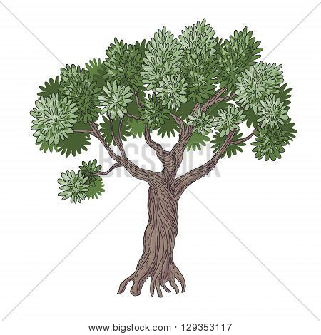 Simplified cartoon image of Olive Tree isolated on white.