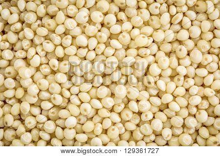 gluten free millet grain background, life size macro