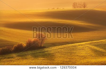 Beautiful spring landscape in South Moravia with green fields trees and flowers at colorful sunset Czech Republic.