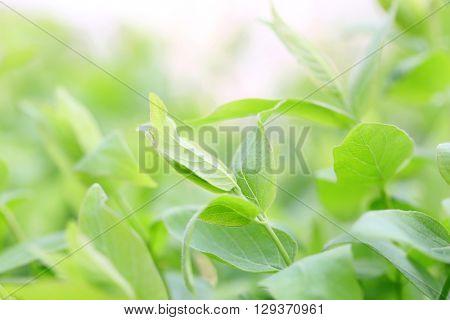 Spring green lush foliage