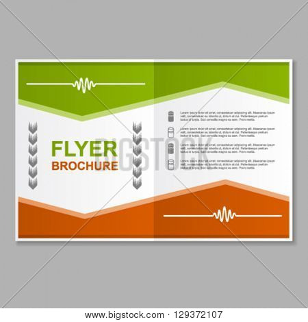 flyer brochure booklet report layout template vector