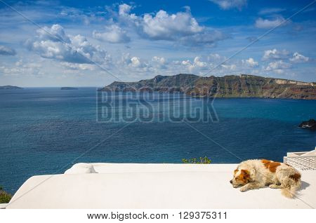 Dog in villa rooftop, Santorini island, Greece